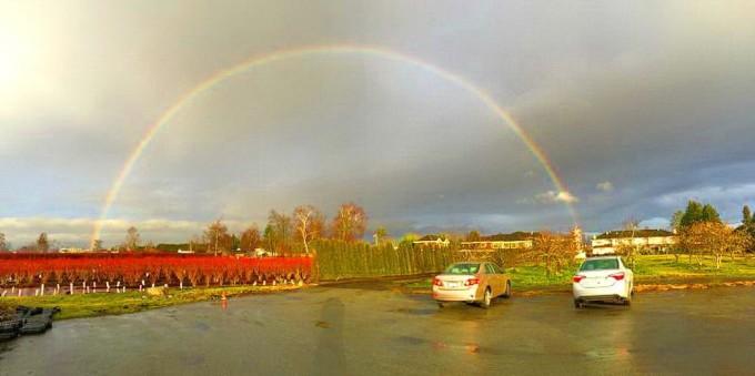llm_rainbow